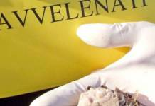 Bocconi avvelenati in provincia di Ascoli