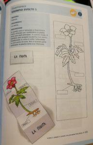 lapbook scienze template
