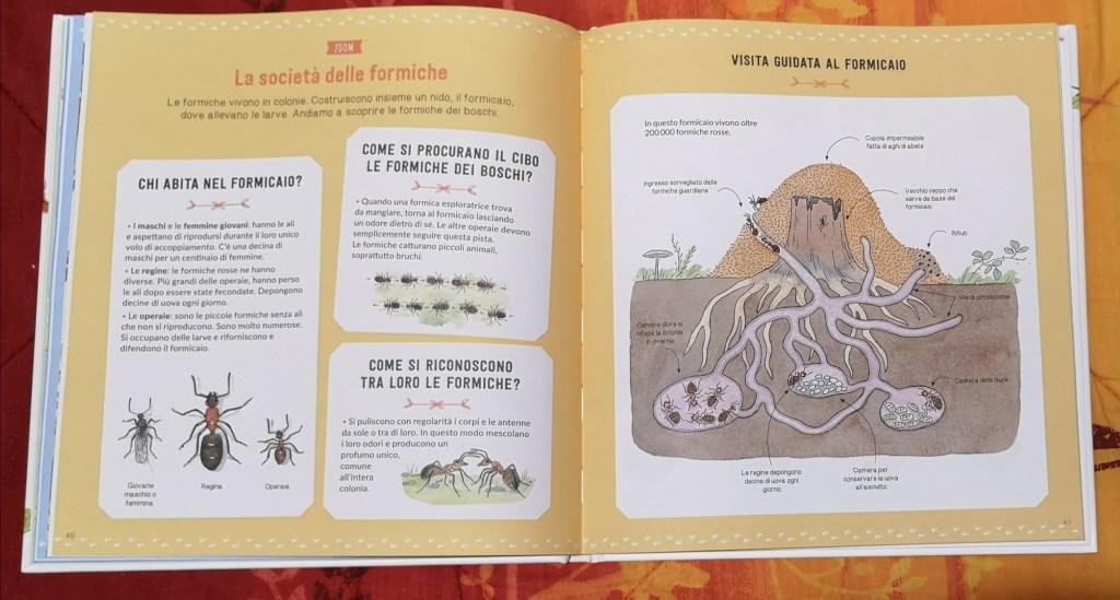 il grande mondo dei piccoli animali formiche editoriale scienza