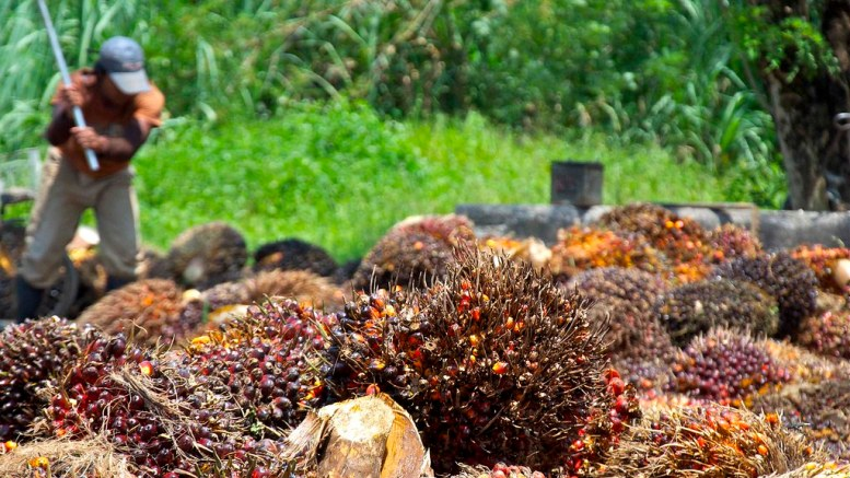 A spat over palm oil: The Philippines' patience with