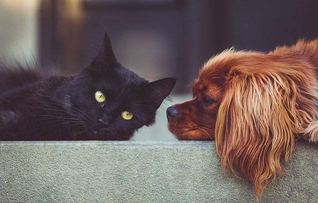 Descubre los mejores seguros para mascotas