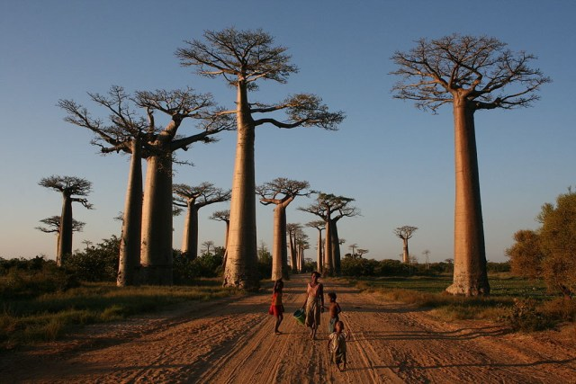 1024px-Walking_the_Avenue_of_the_Baobabs