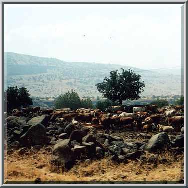 A farm on Golan Heights near Katzrin. The Middle East