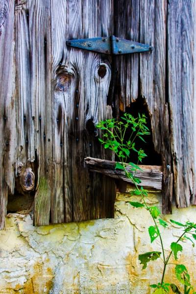 Hinge and Weeds