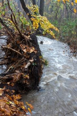 Norwood Road Creek (069)