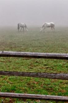 Foggy Horses (2012)