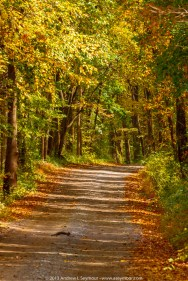 Road through the Woods - East