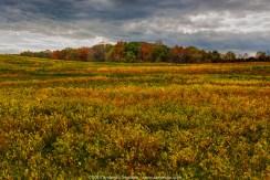 Weather Clouds 169 - Peacedale Preserve