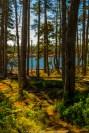Wonderland Trail 113