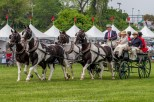 Carriages of Radnor Hunt 063