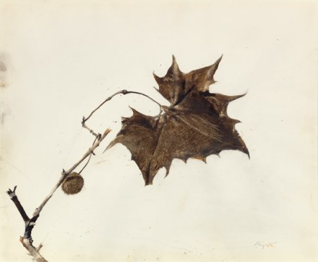 Buttonwood Leaf, 1981. Andrew Wyeth (1917-2009). Drybrush. The Andrew and Betsy