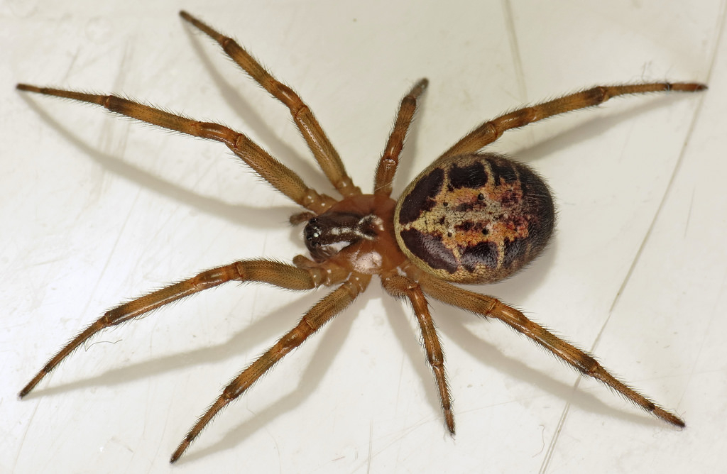 What Type Of Spider Are You Likely To Find In Your Shed Latest Blogs Asgard