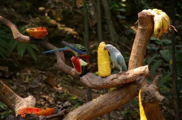 birds at the Chiang mai zoo