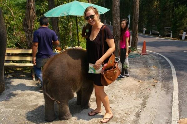 baby elephant chiang mai zoo