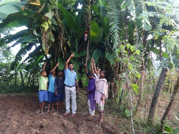 Gemüsegarten mit prachtvoller Bananenstaude, Vivekananda Childrenhome, Kurtumgarh (Foto: Ashakiran)