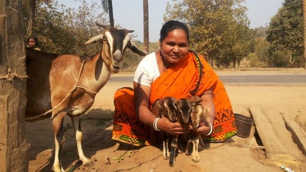 Ziegenprojekt der Witwen (Foto: Ashakiran)