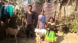 Ziegenprojekt für verarmte Witwen, Hilfe zur Selbsthilfe (Foto: Ashakiran)