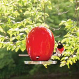 egg shaped bird feeder, bird house