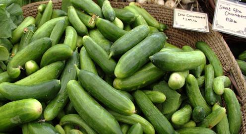 An Abundance of Cucumbers
