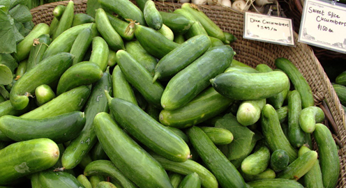 An Abundance of Cucumbers