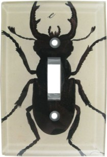 Unique Insect Switchplate