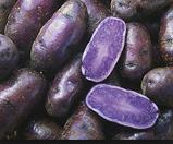 Potatoes---Purple-Peruvians
