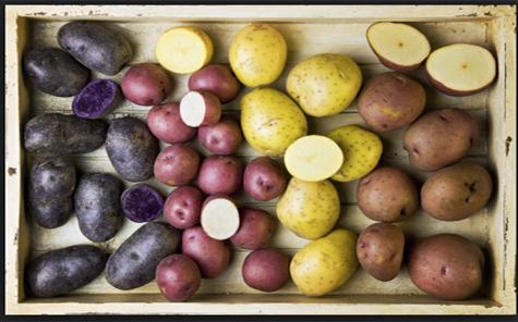 Purple Peruvian Potatoes