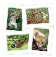 baby-animal-note-cards