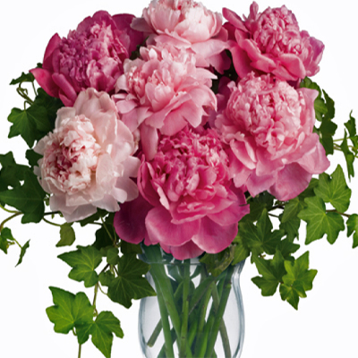 Flowers-by-Season-April-Peonies