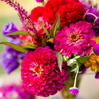Flowers-by-Season---July-Zinnia