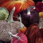 decorative-pumpkins-2