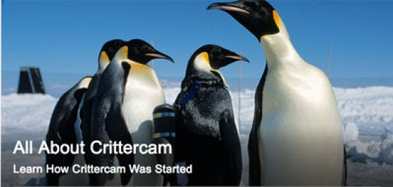 Critter Cam National Geographic