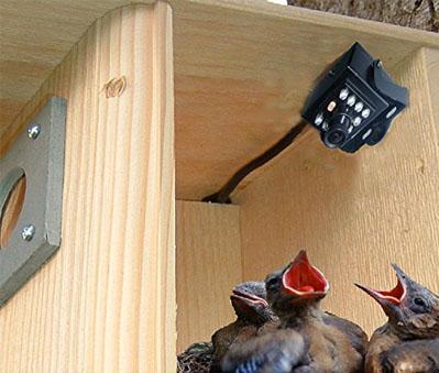 Critter cam bird house