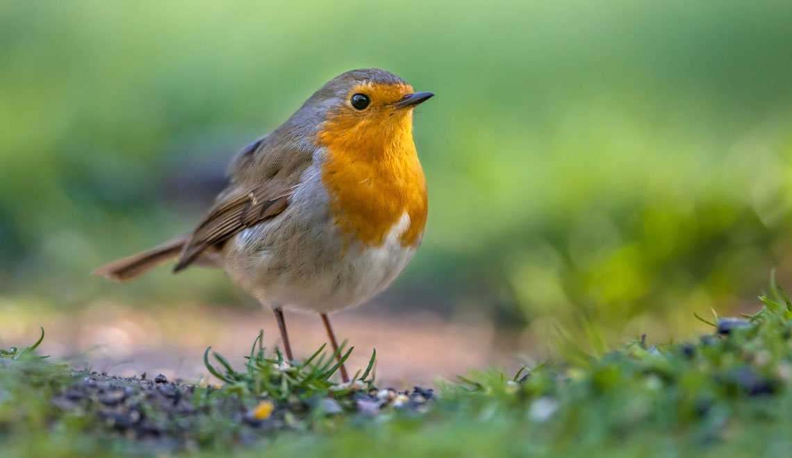 'Birdscape' Your Garden to Attract More Feathered Friends
