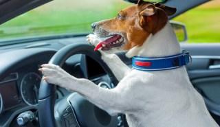 safe road trips