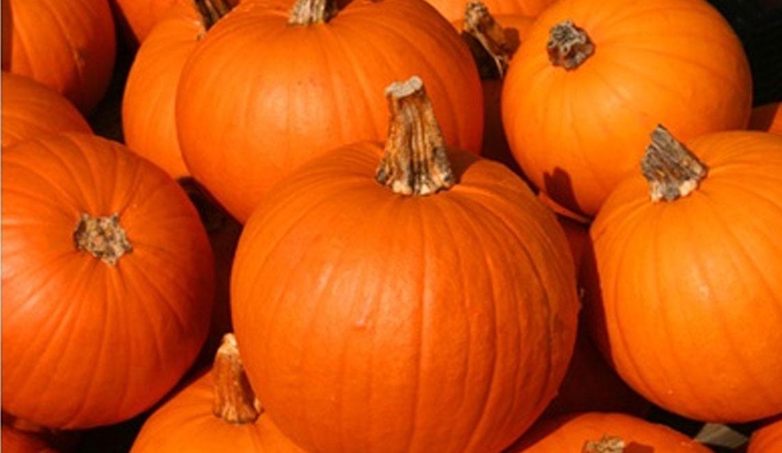 pumpkin is new