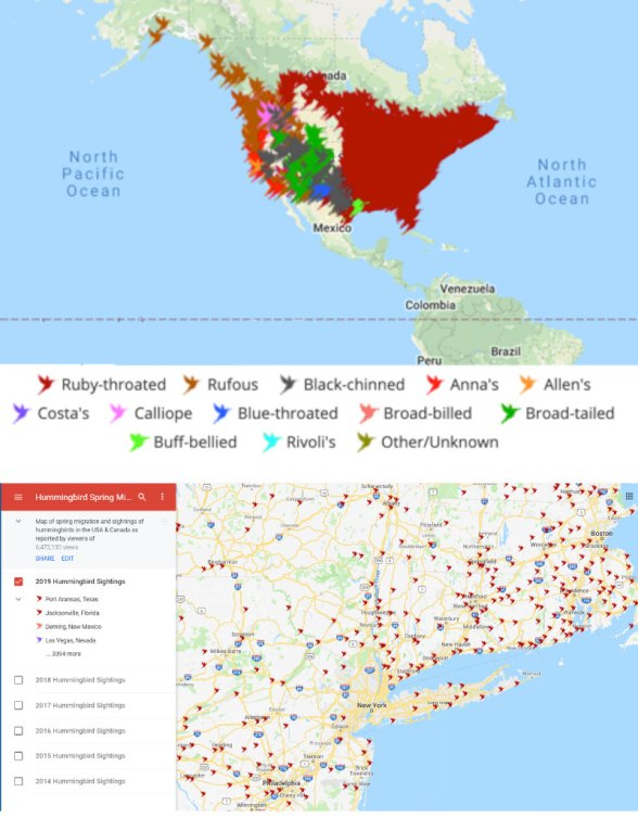Maps for hummingbirds