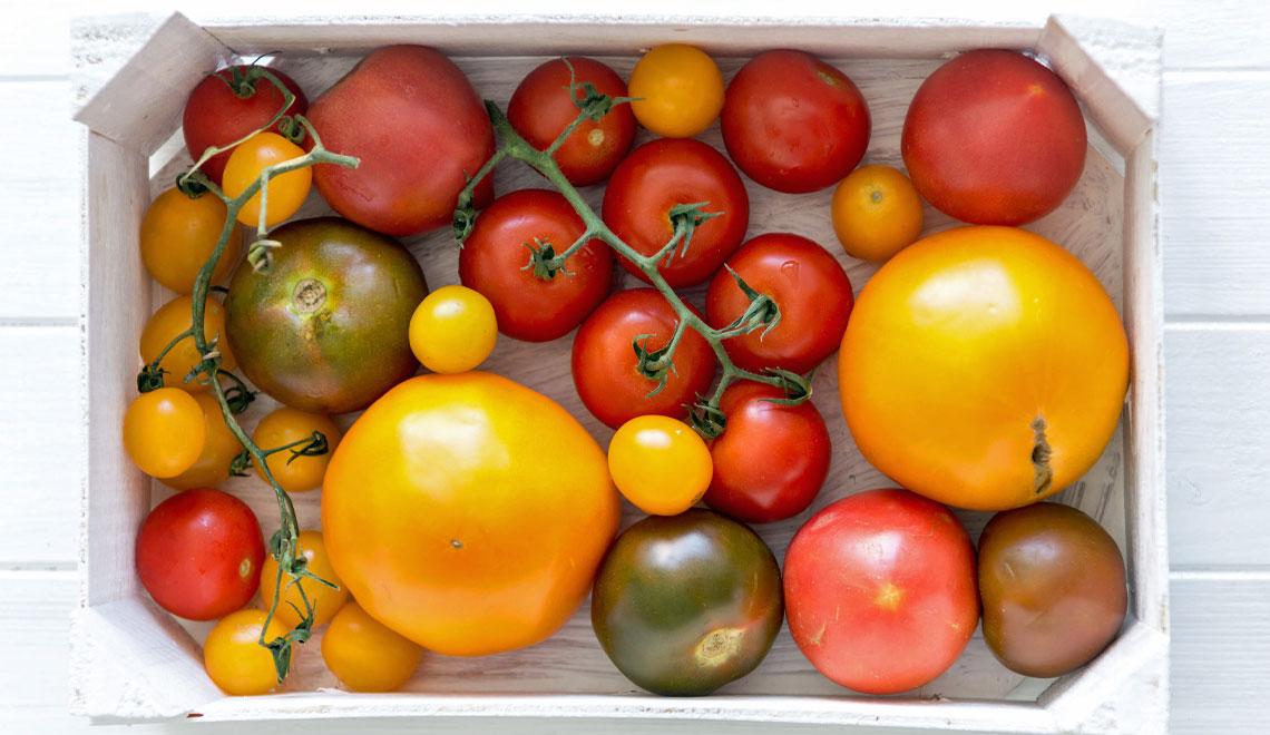 cultivar tomatoes
