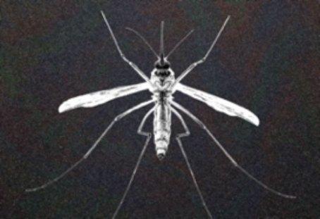Graphene clothing mosquito repellant
