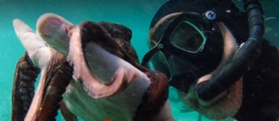 Baby Octopus and Scuba Diver