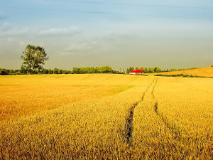 Arable Land Insurance
