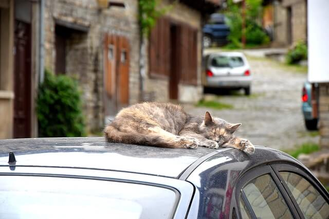 Funny Insurance Claim Involving Animals