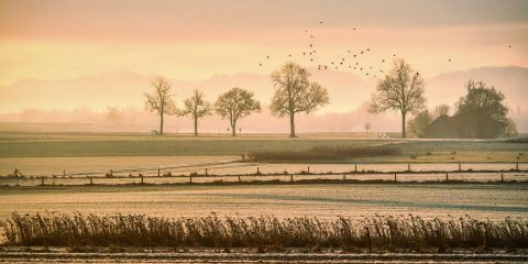 Pasture Insurance Blog