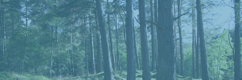 Woodland Insurance