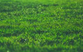 green lawn grocery store