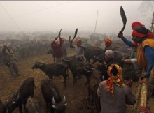 Gadhimai Festival