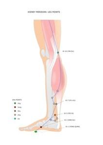 agopuntura: meridiano del rene con i suoi punti sulla gamba, evidenziati i punti shu (punti antichi)