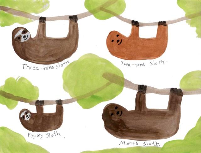 Sloths (Wonderful Wildlife, Book 3) by Ashlee Craft - Sloths