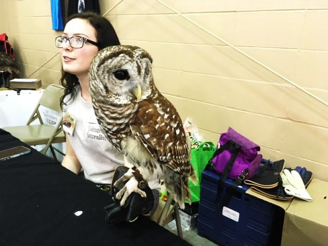 Owl at Friends of Largo Nature Parks - Tampa Repticon