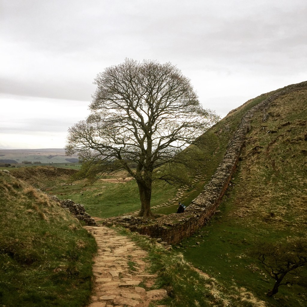 Sycamore gap on Hadrian's Wall (with the famous Robin Hood tree!)